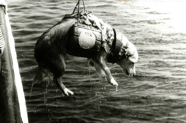 Кузова собака в жилете