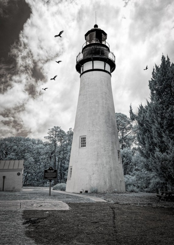 A kettle of vultures around Amelia Island Light