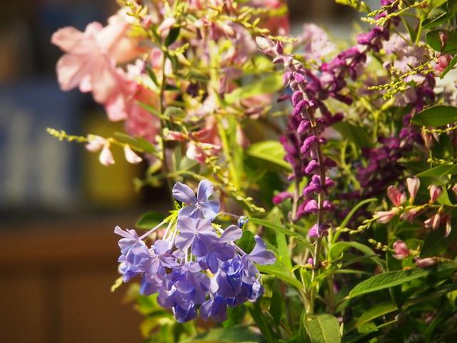 秋の庭の花々