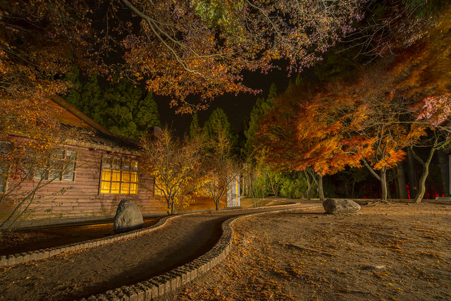 福壽山楓葉
