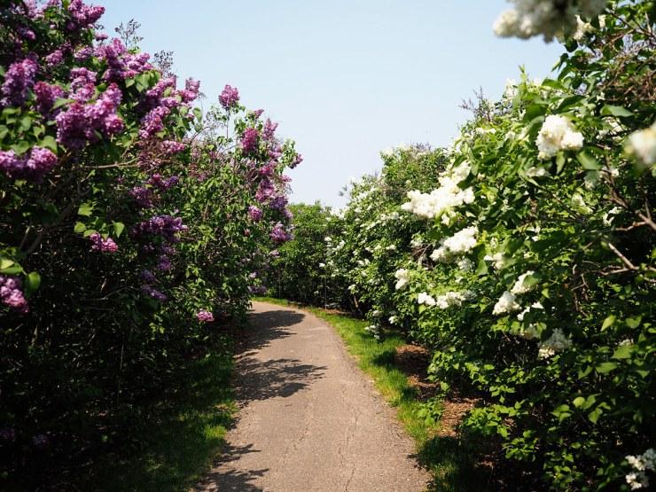 MN Landscape Arboretum - Due Midwest
