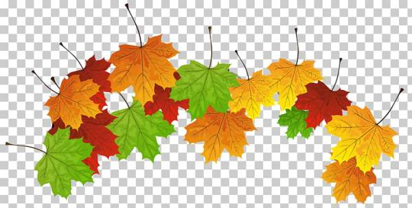 fall leaves png # 18