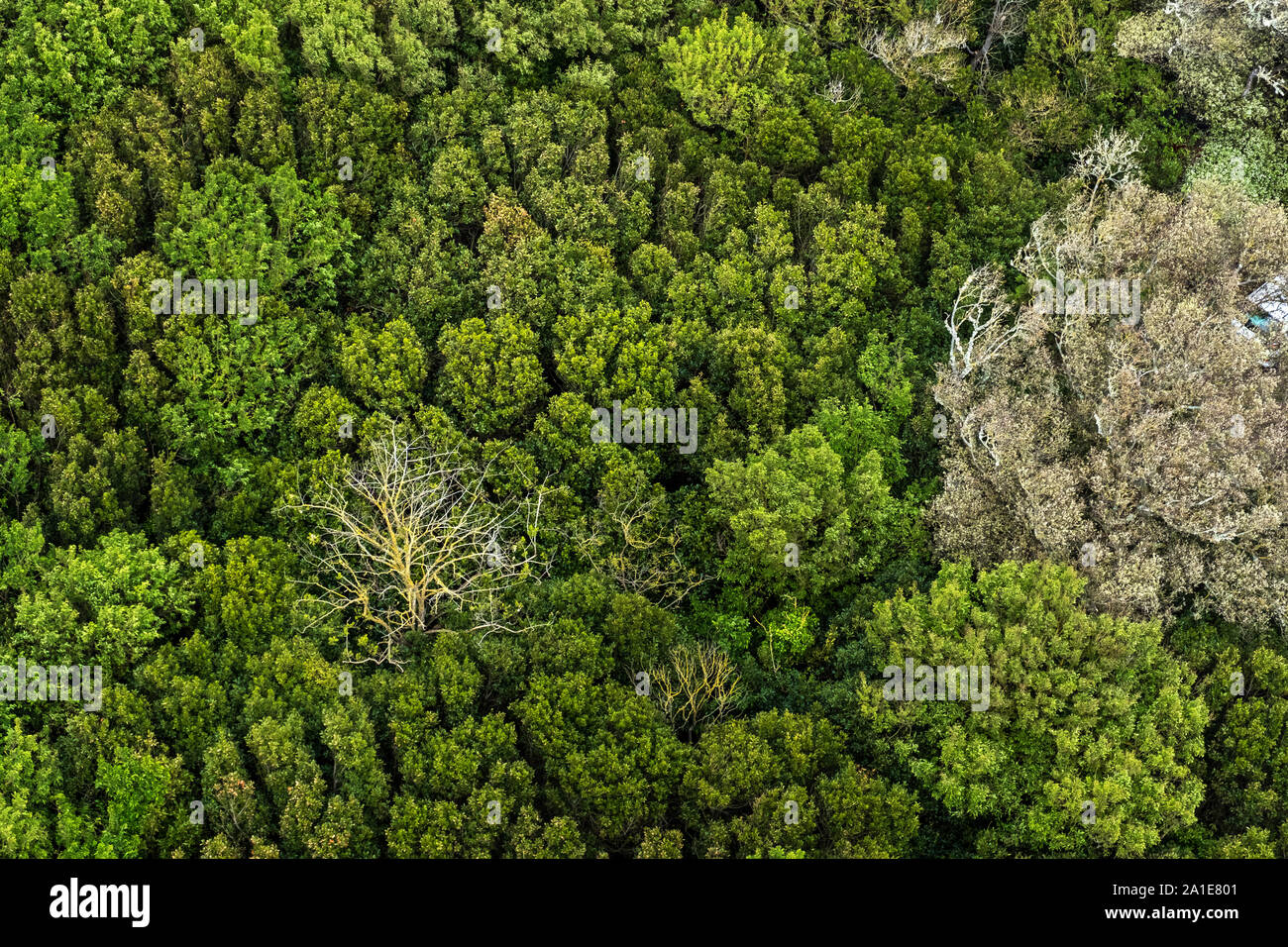 61w x 38h x 3d cm, by: Beautiful Top View Of A Dense Forest On The Island Of Re In France Stock Photo Alamy