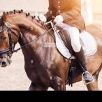 Page 9 Dressage Equestrian Event High Resolution Stock Photography And Images Alamy
