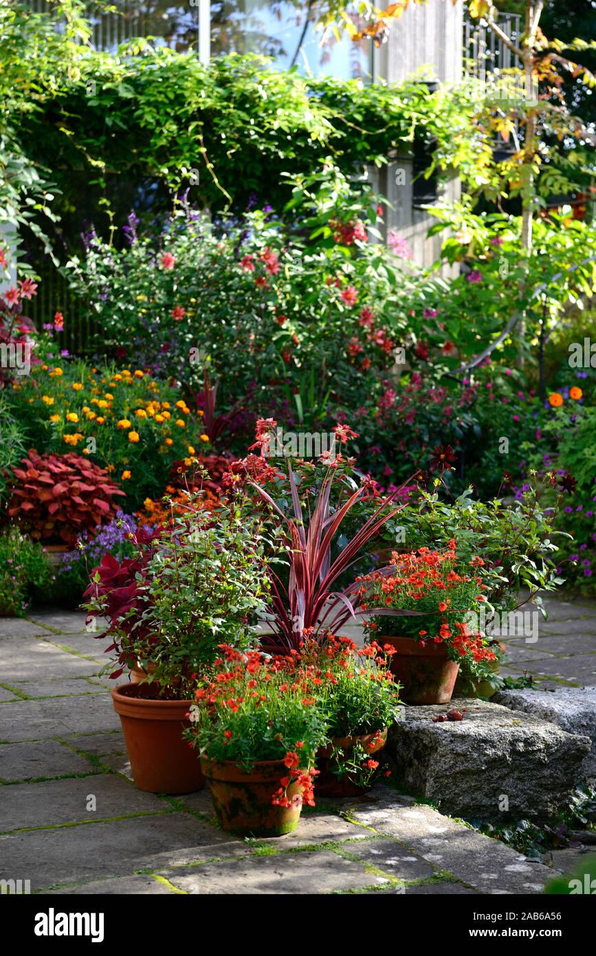 https www alamy com container gardeningpotpotscontainerspatiopatio plantersflowersstepspathorangerustcolourcolorfoliagegardenplantspatthana gardenrm flor image333897906 html
