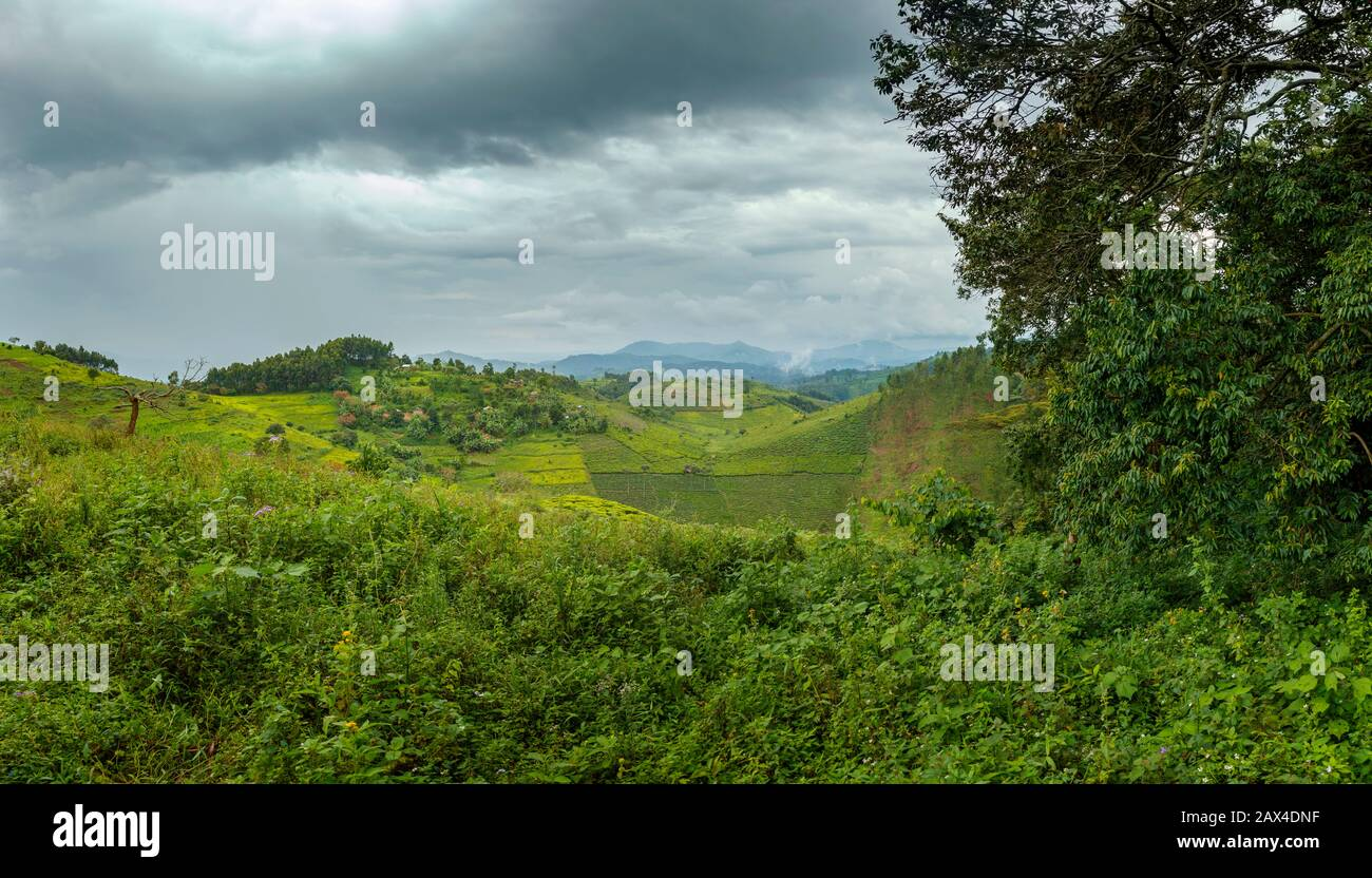 For instance, the world heritage area contains: Equatorial Forest High Resolution Stock Photography And Images Alamy