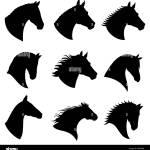 Horse Head Vector Silhouettes Black Silhouette Head Horse Illustration Of Head Wild Stallion Stock Vector Image Art Alamy