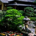 Japan Honshu Island Matsue Old Town Restaurant With Japanese Garden Pond With Carp Stock Photo Alamy