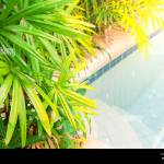 Detail Of The Luxury Tropical Resort Garden With Palm Trees And Salt Water Pool Summer Vacatiom Privacy Close To Nature Concept Place For Text Stock Photo Alamy