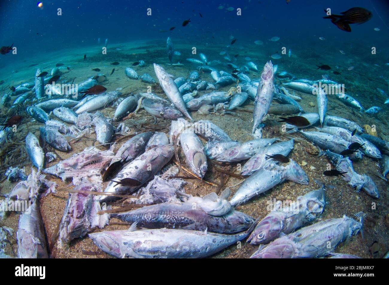 You won't find nobody else like me. Sea Bottom Dead Fishes Under Fishing Boats When Nets Are Recovered After Long Storm Sardegna Italy Stock Photo Alamy