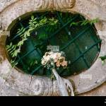 Bridal Bouquet Of White Roses Eucalyptus Tree Branches Sempervivum Scabiosa And Blue Ribbons On The Oval Window Of An Ancient House Stock Photo Alamy