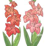 Gladiolus Flower Graphic Color Isolated Sketch Set Illustration Vector Stock Vector Image Art Alamy