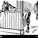 The Picture Depicts A Horse Feeding In A Stable Generally A Horse Can Sleep Both Lying Down And Standing Up Vintage Line Drawing Or Engraving Illus Stock Vector Image Art