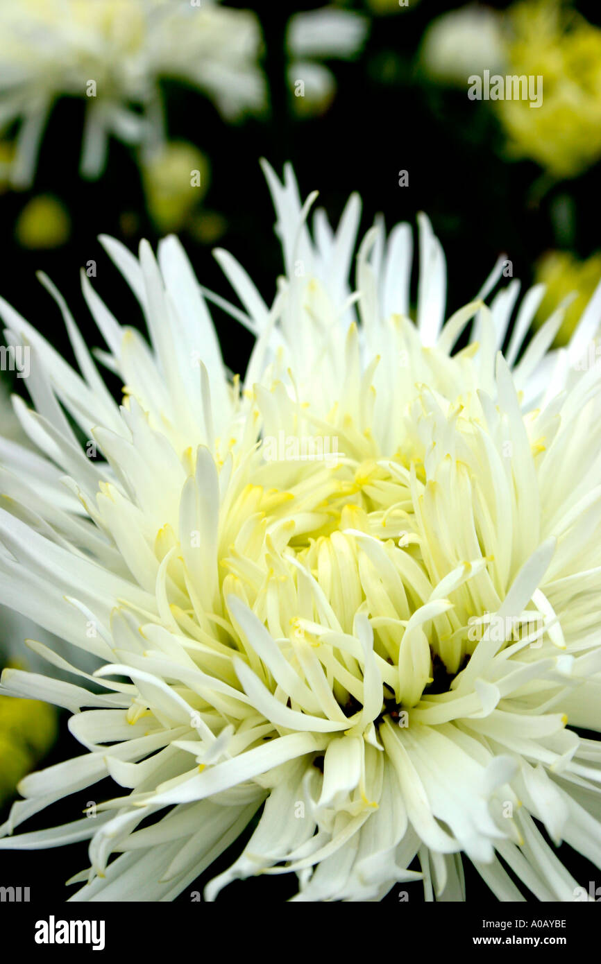 Charming white flowers names ideas wedding and flowers ispiration what is the name of a white flower images flower decoration ideas mightylinksfo Gallery
