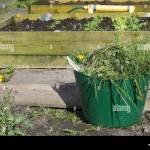 Picture Of A Bucket Of Weeds In Front Of Raised Beds Growing Spring Stock Photo Alamy