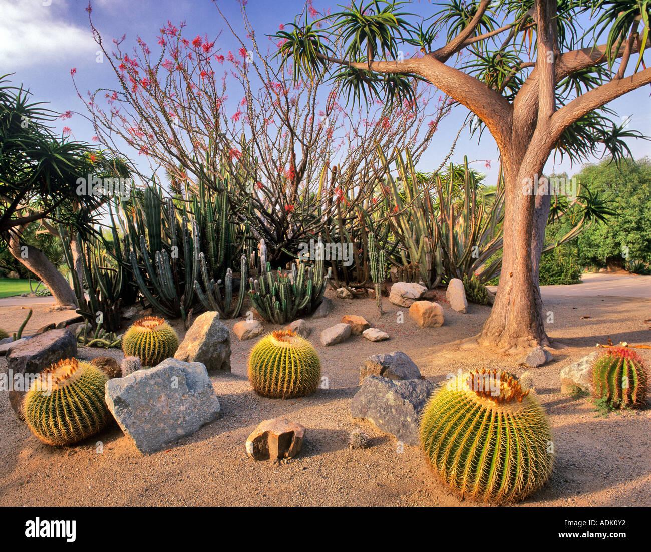 Colorful Arizona Botanical Gardens Composition - Brown Nature Garden ...