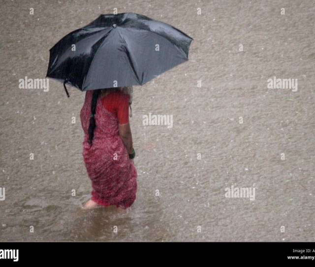 Indian Woman In Drenched Wet Saree Walking In Knee Deep Water Monsoon Rain Under Black Umbrella In Bombay Now Mumbai India Asia