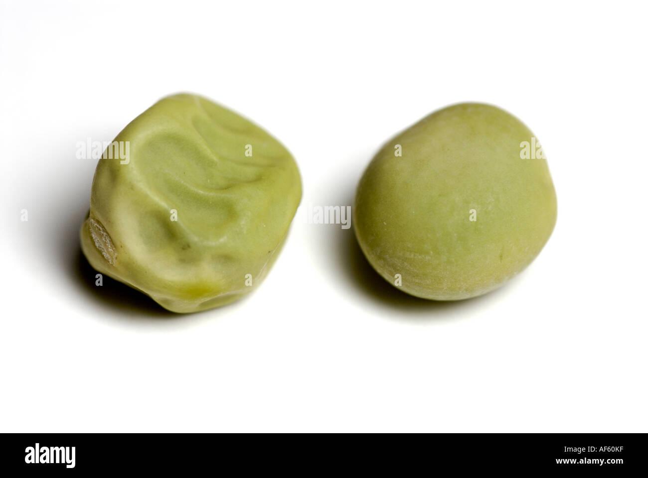 Green Smooth And Wrinkled Pea Seeds Traits Gregor Mendel