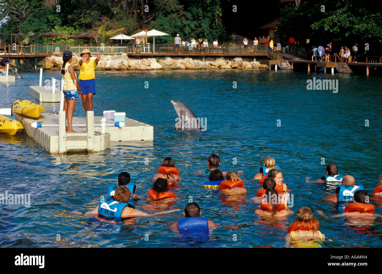 Learn about dcove (xjam) with our data and independent analysis including price, star rating, valuation, dividends, and financials. Jamaica Dolphin Cove Ocho Rios Dolphin Jumping Tourists Stock Photo Alamy