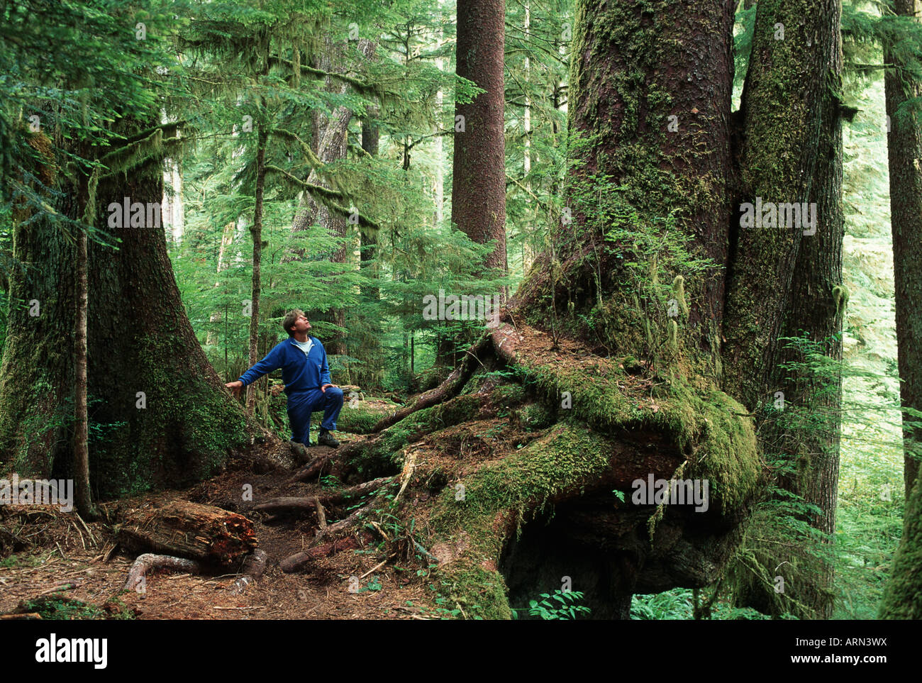 """Set in the old growth forests of british columbia, """"cutblock"""" Pathway In Old Growth Forest Carmanah Valley Vancouver Island British Columbia Canada Stock Photo Alamy"""