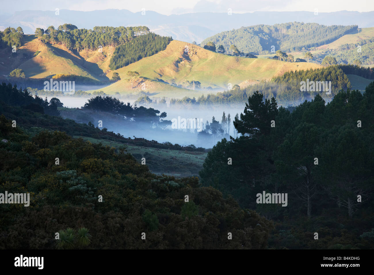 Forest Land Hills And Mist In A Valley The Coromandel