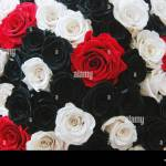 A Bouquet Of Red White And Black Roses Put On Display At The Flowers Stock Photo Alamy