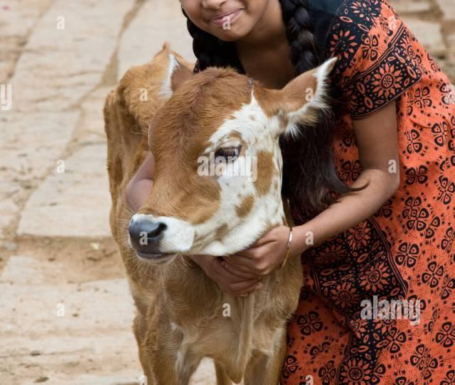Young Indian Village Girl Hugging A Calf In A Rural Indian Village Andhra Pradesh