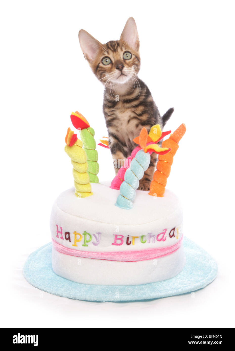 Birthday Cake Cut Out Stock Photos Amp Birthday Cake Cut Out