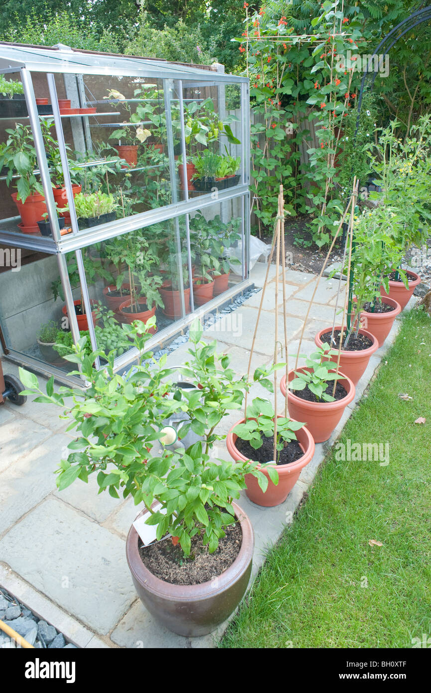 https www alamy com stock photo a small 6ft tall mini lean to greenhouse built up against a fence 27680591 html