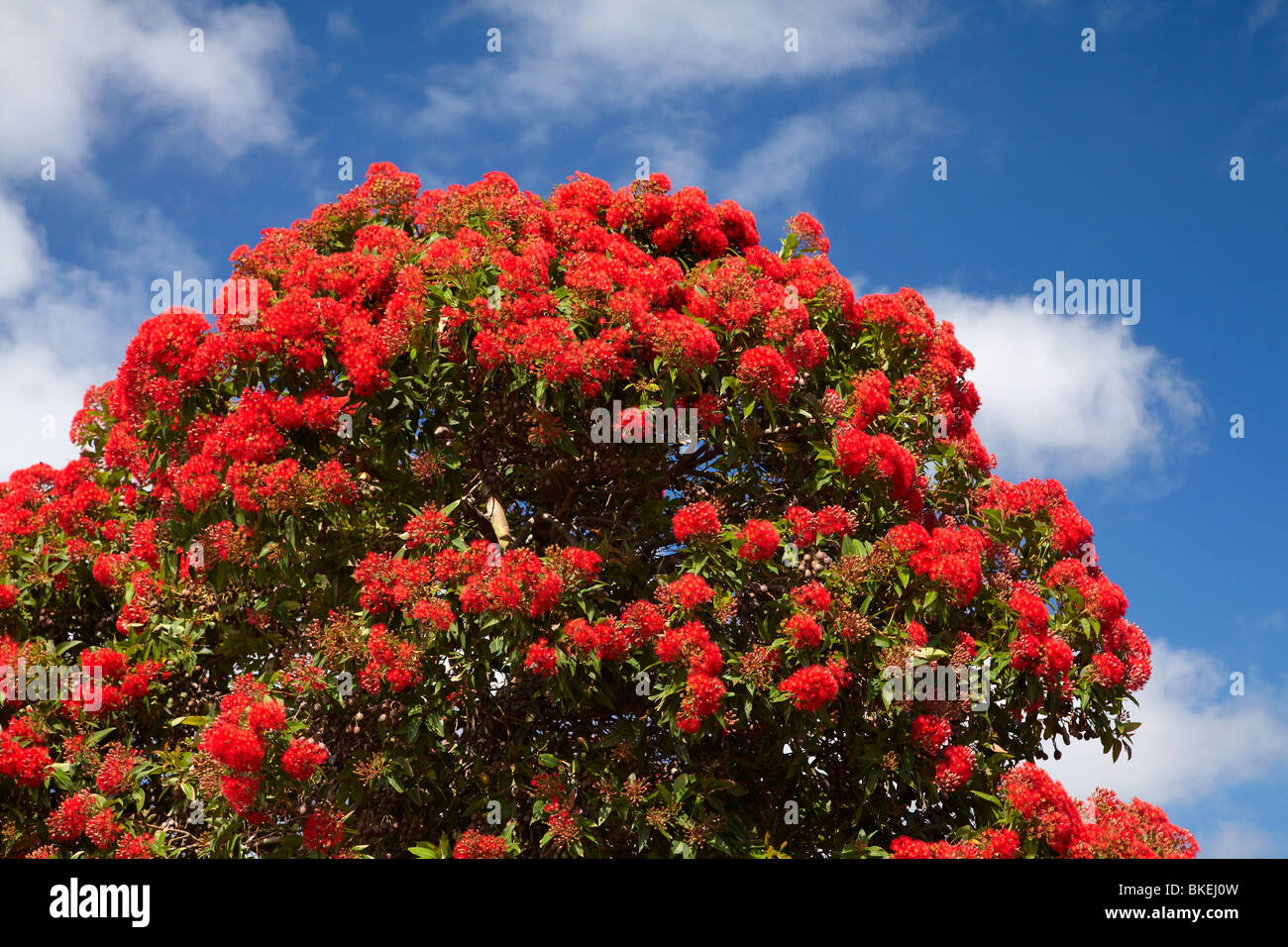 Flower Tree High Resolution Stock Photography And Images Alamy