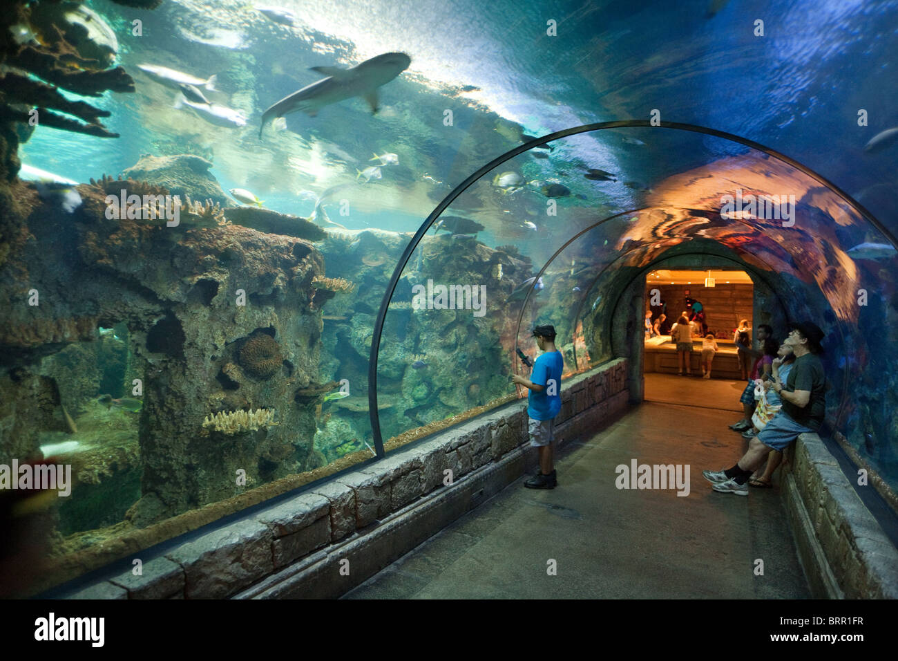 Aquarium Mandalay Bay