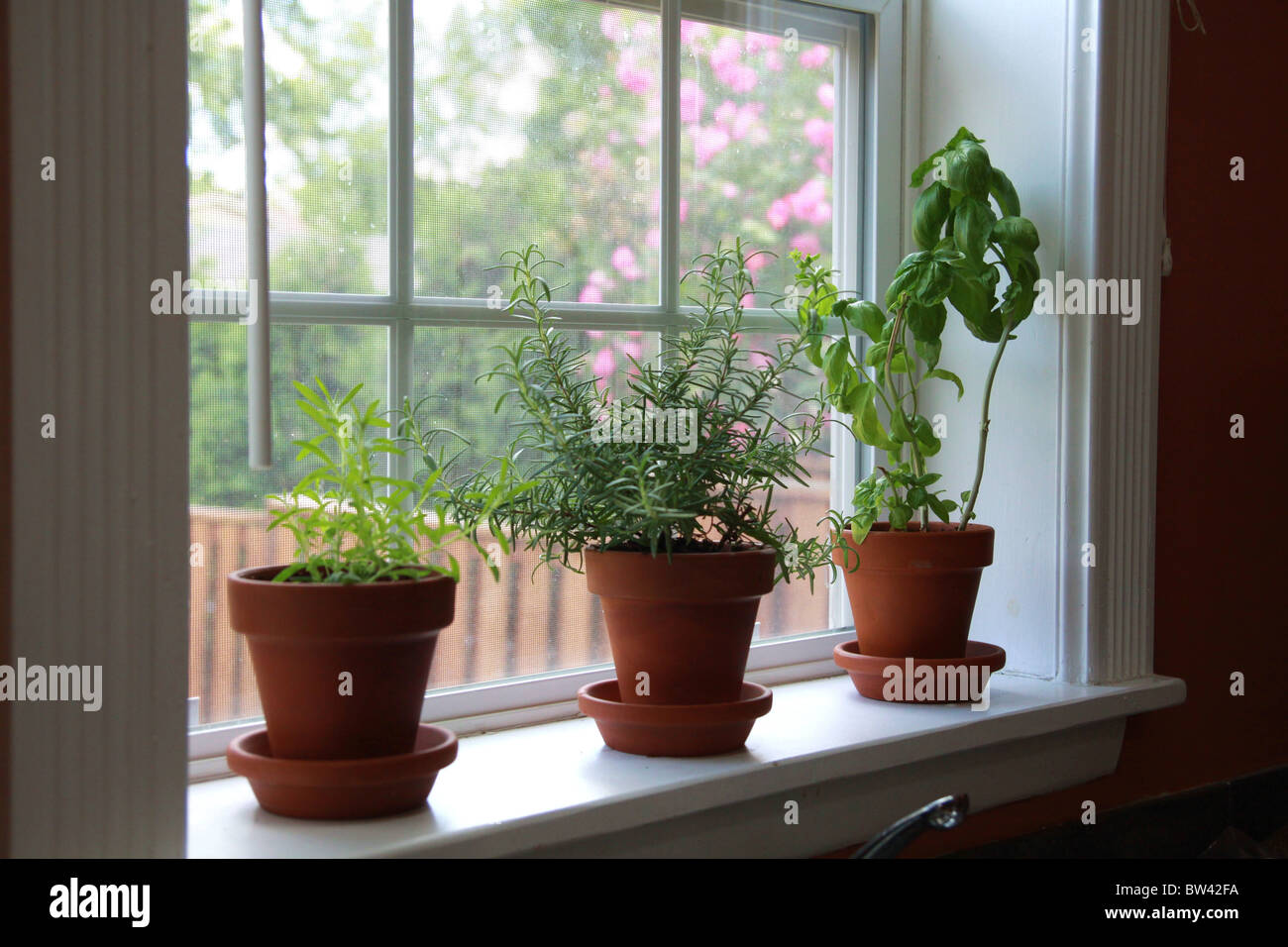 A Windowsill Herb Garden With Lavender Rosemary And Basil Stock Photo Alamy