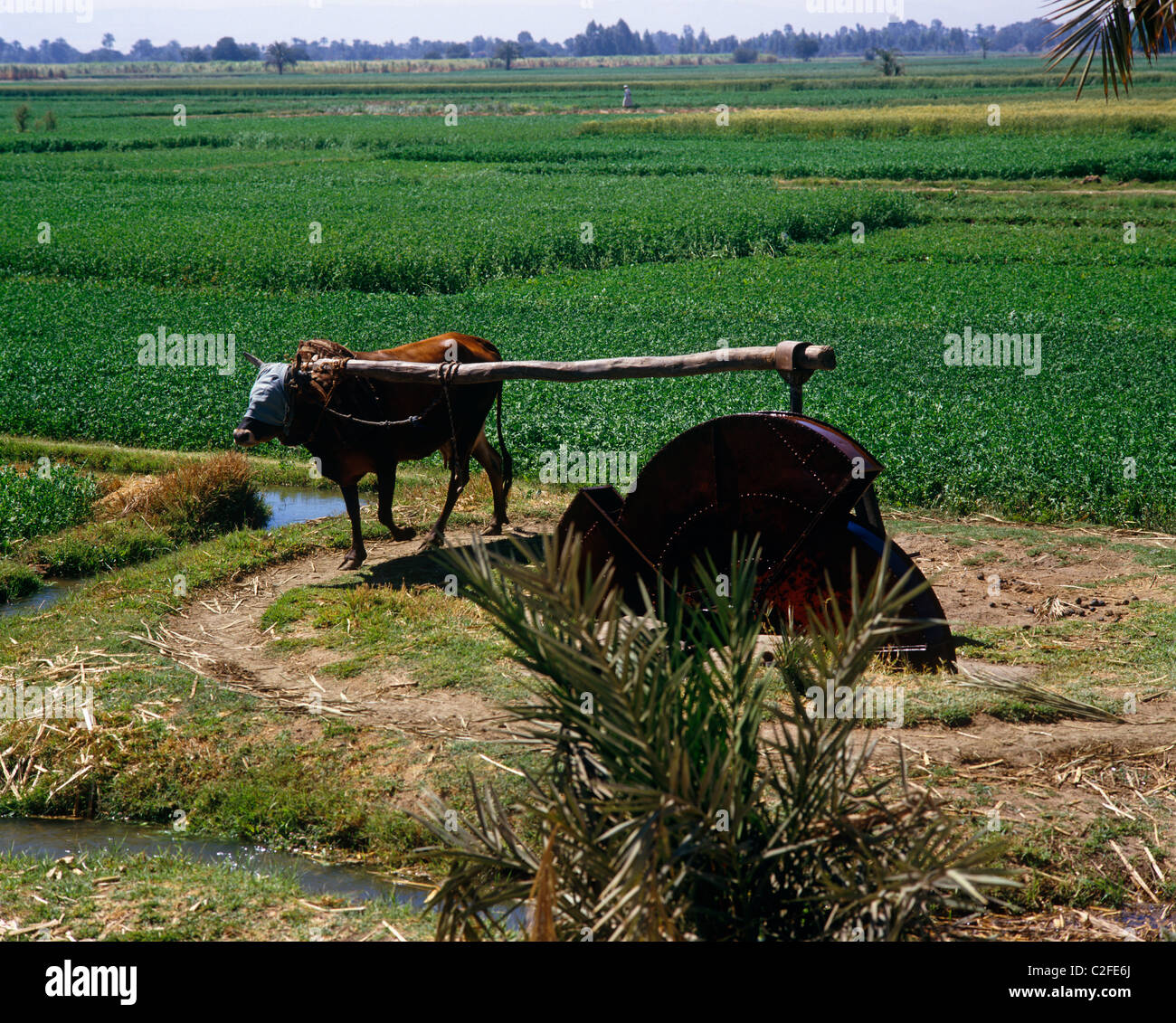 Irrigation Nile Valley Egypt Stock Photo Royalty Free Image