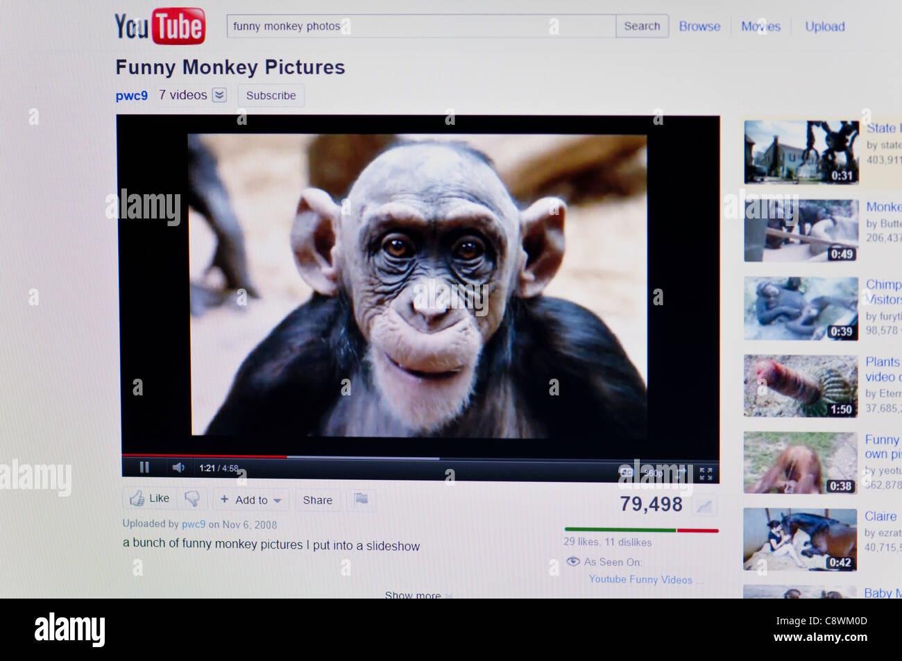 Image of: Animals Youtubecom Funny Video Screenshot Blazepress Youtubecom Funny Video Screenshot Stock Photo 39902477 Alamy