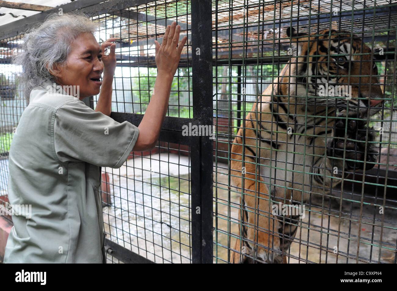 Tiger Zoo Keeper Stock Photos Amp Tiger Zoo Keeper Stock