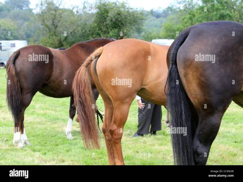 Horses Rear End Stock Photos & Horses Rear End Stock Images - Alamy