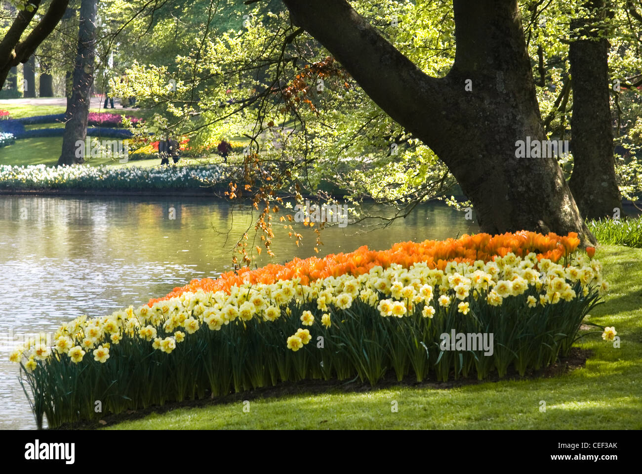 Pond In Park With Arrangement Of Tulips And Daffodils