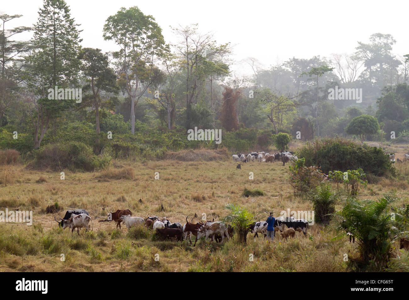 Nimba Mountain Liberia