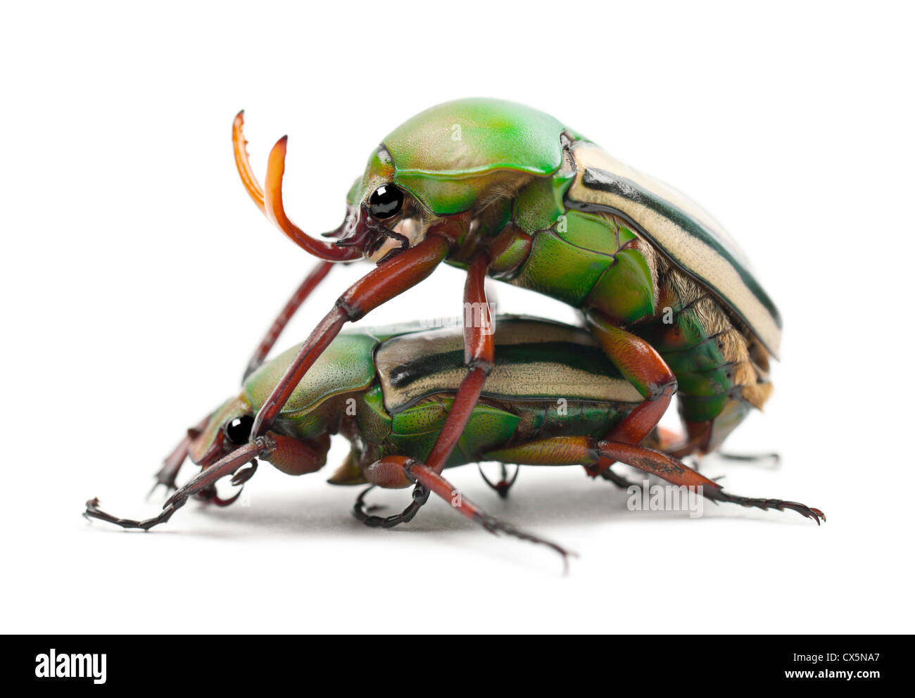 Image Beetles Stock Photos Amp Image Beetles Stock Images