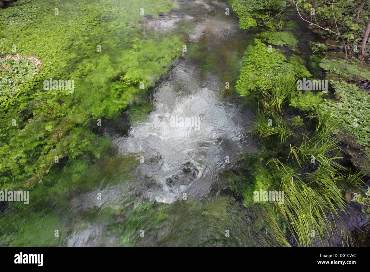 Natural Mineral Water Spring Water Source With Aquatic Vegetation Stock Photo