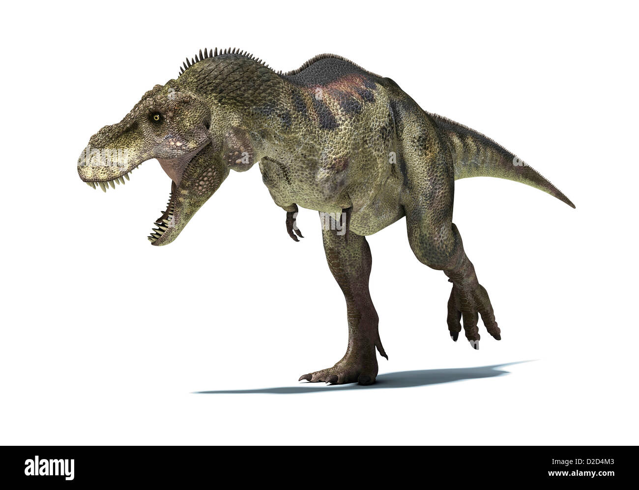 Tyrannosaurus Rex Dinosaur T Rex Was One Of The Largest