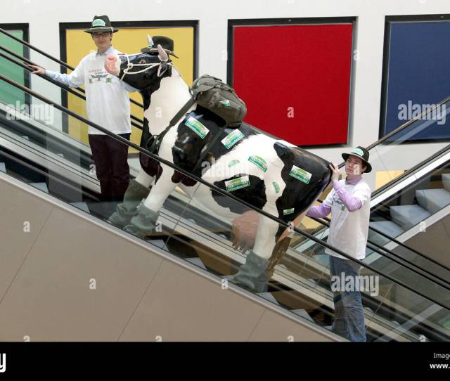Escort The Advertising Puppet Cow Elsa On An Escalator To The Press Centre For International Agricultural Trade Fair Green Week In Berlin Germany