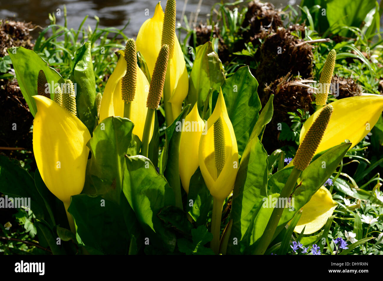 Yellow Plants Flowering Water