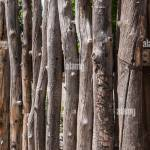A Close Up View Of A Traditional Fence Made Of Tree Branches As Is Stock Photo Alamy