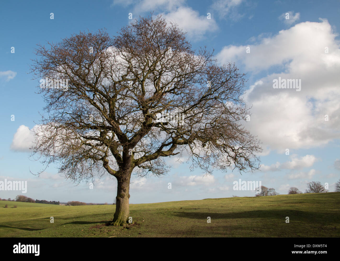 Tree Without Leaves Stock Photos Amp Tree Without Leaves