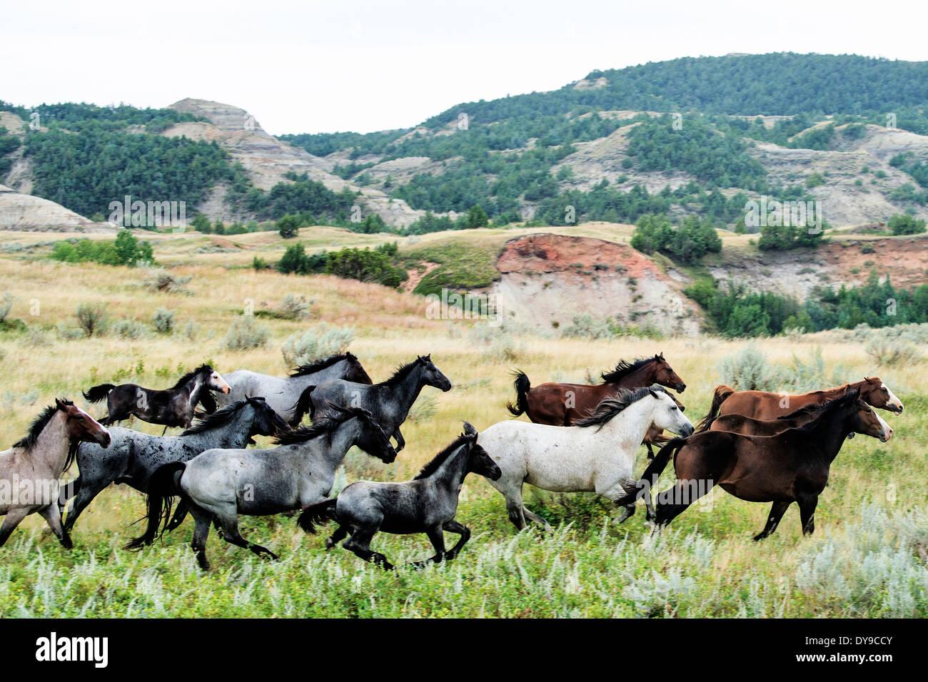 Wild Horse Theodore Roosevelt National Park North