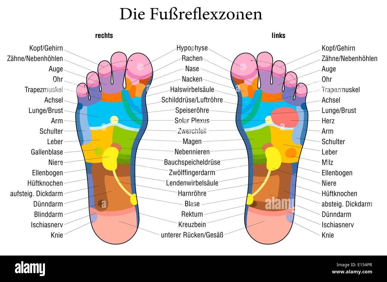 Foot Reflexology Chart With Accurate Description German Labeling Stock Photo