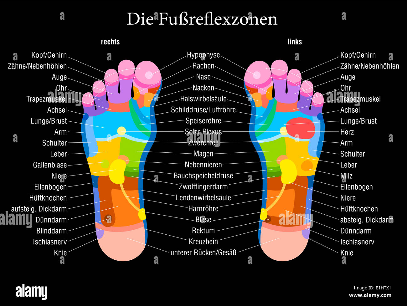 Foot Reflexology Chart With Accurate Description German
