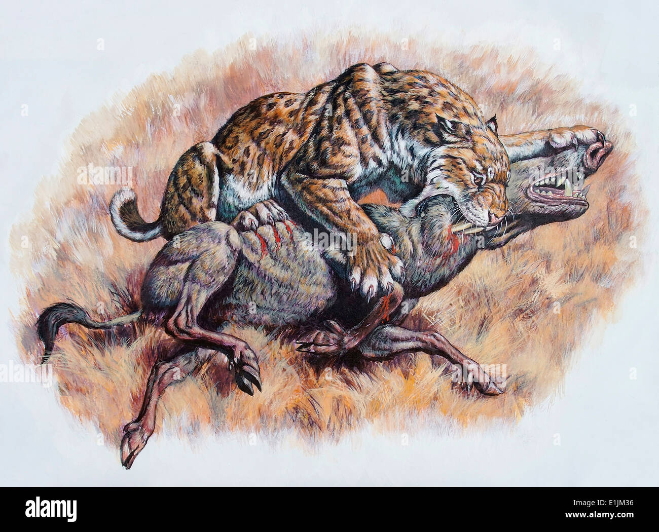Smilodon Dirk Sabertooth Killing A Platygonus Peccary
