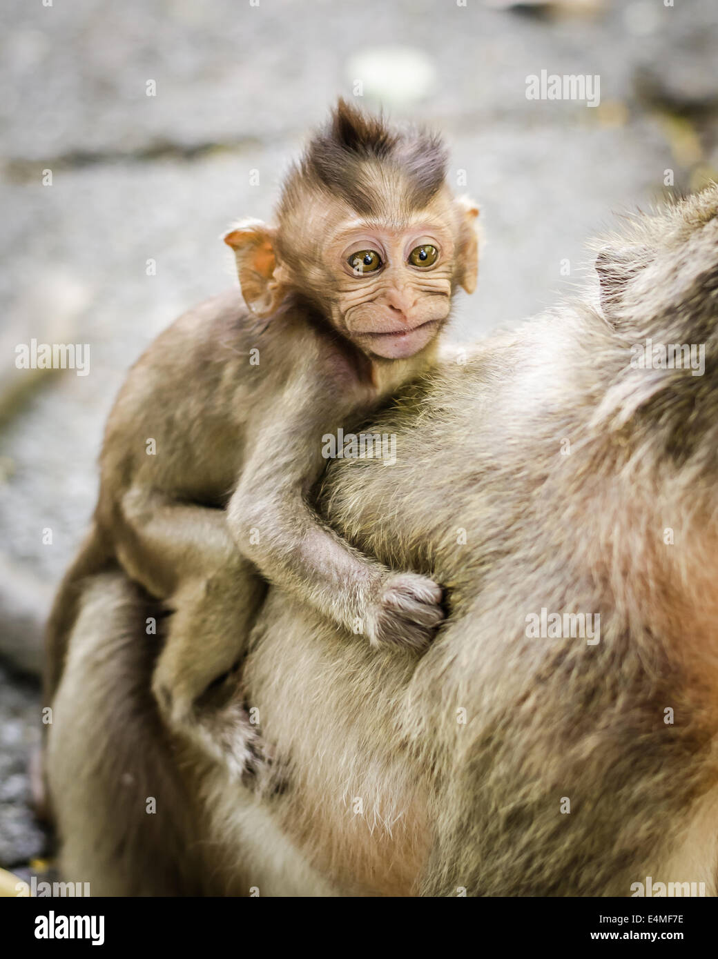 Cute Monkeys A Cute Monkey Lives In A Natural Forest Of Thailand Stock Photo Alamy
